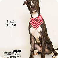Adopt A Pet :: Lincoln - Baton Rouge, LA