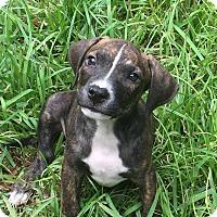 Adopt A Pet :: Jim - Houston, TX
