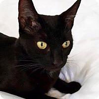 Adopt A Pet :: Pandora - Los Angeles, CA