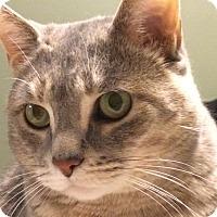 Adopt A Pet :: Arwin - Toronto, ON