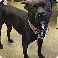 Adopt A Pet :: GEORGIA - Cadiz, OH