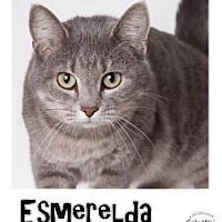 Adopt A Pet :: Esmeralda - Hutchinson, KS