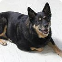 Adopt A Pet :: Lennie - Yukon, OK
