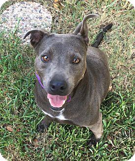 Terrier (Unknown Type, Medium) Mix Dog for adoption in San Antonio, Texas - Princess Kirby