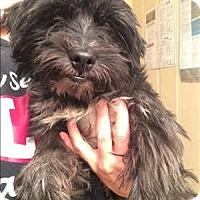 Adopt A Pet :: Whiskey - Encino, CA