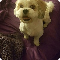 Adopt A Pet :: Allie - Henderson, NV