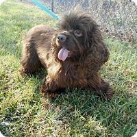 Adopt A Pet :: Sassy - Kannapolis, NC