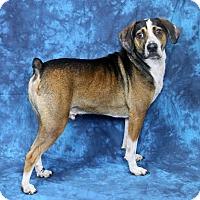 Adopt A Pet :: Oscar - Joliet, IL