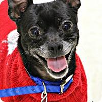 Adopt A Pet :: Nacho - Dunkirk, NY