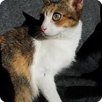 Adopt A Pet :: Sarabi - Hornell, NY