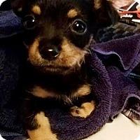 Adopt A Pet :: Gimli - Houston, TX
