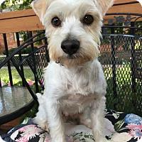 Adopt A Pet :: Kenny - Great Bend, KS