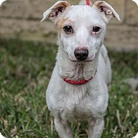 Adopt A Pet :: Duncan - Houston, TX