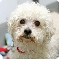 Adopt A Pet :: Barney - Kettering, OH