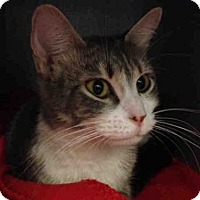 Adopt A Pet :: PICKLES - Pittsburgh, PA