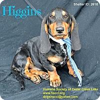 Adopt A Pet :: Higgins - Plano, TX