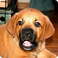 Adopt A Pet :: Sprout - Richmond, VA