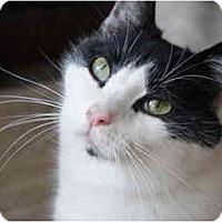 Adopt A Pet :: Magoo - Xenia, OH