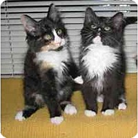 Adopt A Pet :: Star & Holly - Davis, CA
