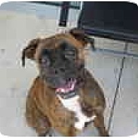 Adopt A Pet :: Stella - Albany, GA