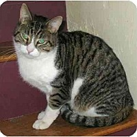 Adopt A Pet :: Jake - Plainville, MA