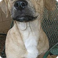 Adopt A Pet :: Lexington - Phoenix, AZ