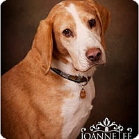 Adopt A Pet :: Rodney - PENDING! - kennebunkport, ME