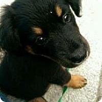 Adopt A Pet :: Jordie Benn - Westfield, MA
