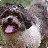 Adopt A Pet :: Lilly - Rock Hill, SC