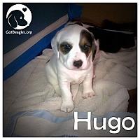 Adopt A Pet :: Hugo - Novi, MI