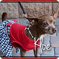 Adopt A Pet :: Kloe - Phoenix, AZ