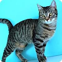 Adopt A Pet :: Ilene - Fairfax, VA