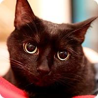 Adopt A Pet :: Jiffy - Rochester, NY