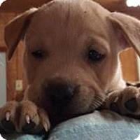 Adopt A Pet :: Scampi - Barnegat, NJ