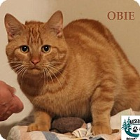 Adopt A Pet :: Obie - Great Companion! - Huntsville, ON