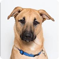 Adopt A Pet :: Simba - San Luis Obispo, CA