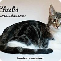 Adopt A Pet :: Chubs - Modesto, CA