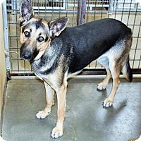 Adopt A Pet :: Tuti - San Jacinto, CA