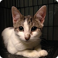 Adopt A Pet :: Chloe - East Brunswick, NJ