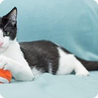 Adopt A Pet :: Hans - Vancouver, BC