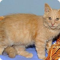 Adopt A Pet :: Norton - Gatineau, QC