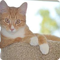 Adopt A Pet :: Jude - San Leon, TX