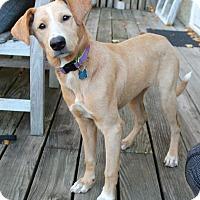 Adopt A Pet :: Steph - Mt. Prospect, IL