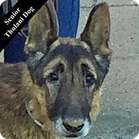 Adopt A Pet :: Toby T. - Cupertino, CA