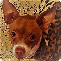 Adopt A Pet :: Stella - Oakley, CA
