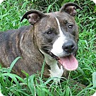 Adopt A Pet :: Roxy *URGT IMMED FOSTER HOME NEEDED*