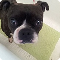 Adopt A Pet :: Mylo - Cumberland, MD