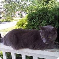 Adopt A Pet :: Jade - Richfield, OH