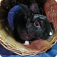 Adopt A Pet :: Terrance - Newport, DE