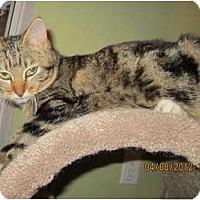 Adopt A Pet :: Bunny - Bunnell, FL
